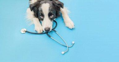 الأمراض التي تنتقل من الكلاب للإنسان والوقاية منها