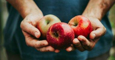 تفسير رؤية التفاح في المنام ورمز شجرة التفاح في