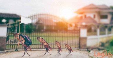 تفسير الصراصير في المنام ومعنى رؤية الصرصور في الحلم