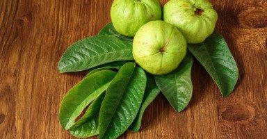 فوائد ورق الجوافة للشعر والبشرة وطريقة استخدامها