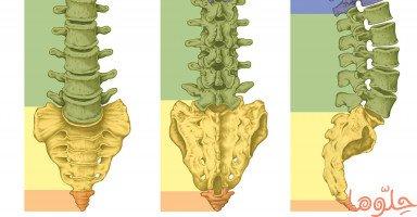 بنية العمود الفقري وأهم الأمراض التي تصيب الفقرات