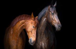 تفسير حلم الحصان ورؤية ركوب الخيل في المنام بالتفصيل
