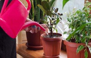 طريقة العناية بالنباتات المنزلية ونباتات الزينة