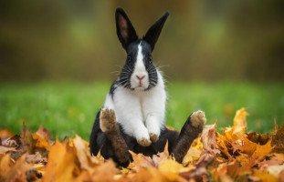تفسير رؤية الأرنب في المنام و معنى حلم الأرانب