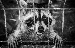 ظاهرة تعذيب الحيوانات بين الدوافع والروادع
