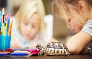 """""""طفلي بطيء بالتعلم"""" أعراض بطء التعلم عند الأطفال وعلاجه"""