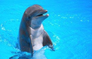 تفسير رؤية الدلفين في المنام بالتفصيل