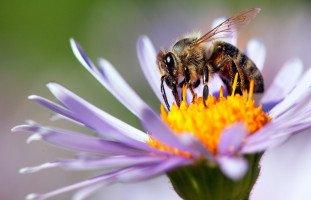 النحلة في المنام وتفسير رؤية النحل في الحلم بالتفصيل