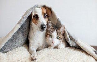 فوائد تربية حيوان أليف للأطفال وسلبيات تربية الحيوانات الأليفة في البيت