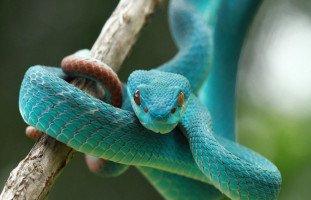 حلم الثعبان وتفسير رؤية الثعابين والحيَّات في المنام