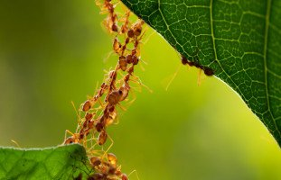 النمل في المنام وتفسير رؤية النمل في الحلم بالتفصيل
