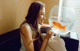 تفسير حلم سمك الزينة للعزباء وللمتزوجة بالتفصيل