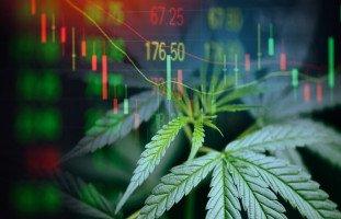 تأثير المخدرات على الاقتصاد وأضرار المخدرات الاقتصادية