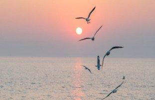 تفسير رؤية طائر النورس في المنام بالتفصيل