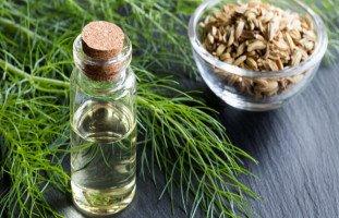 فوائد نبات الشمر وتأثير بذور الشمر على الصحة