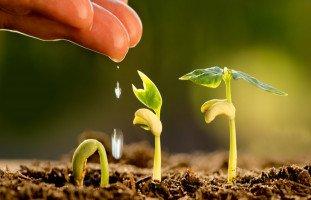 الزرع في المنام وتفسير حلم الزراعة بالتفصيل