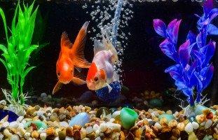 تفسير سمك الزينة في المنام والسمك الملوّن في الحلم