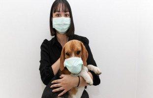 هل ينتقل فيروس كورونا من وإلى الحيوانات الأليفة؟