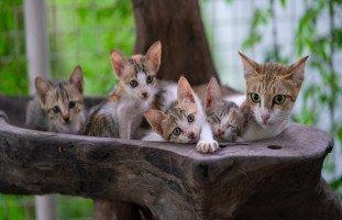 تفسير رؤية القطة في المنام للعزباء وللمتزوجة