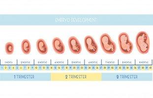 جدول وزن الجنين الطبيعي بالأسابيع (وزن الطفل عند الولادة)