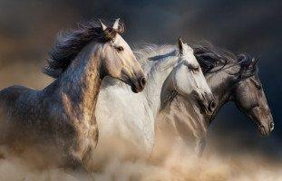 تفسير رؤية الحصان في المنام لابن سيرين والنابلسي وغيرهم