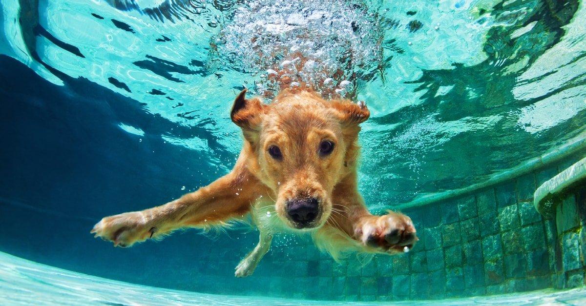 الكلاب في المنام وتفسير رؤية الكلب في الحلم