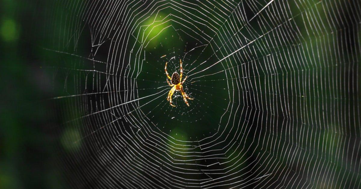 العنكبوت في المنام وتفسير رؤية العناكب في الحلم