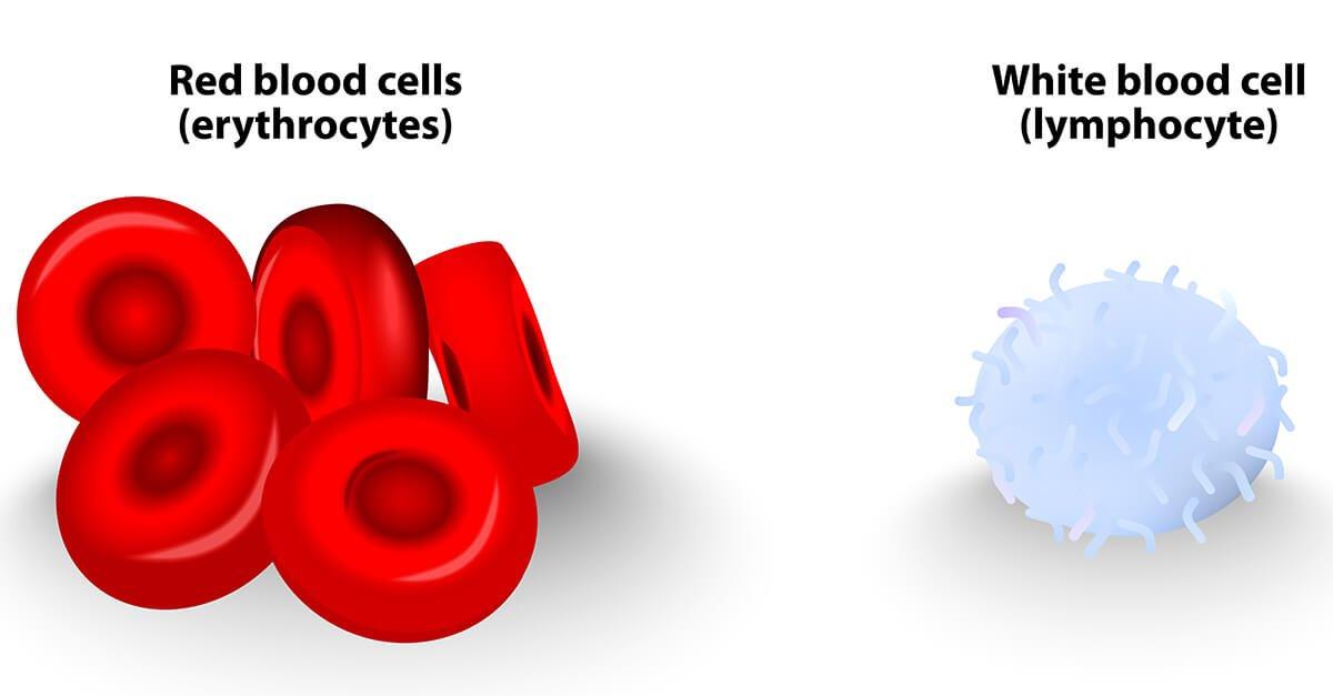 أنواع كريات الدم البيضاء والخلل في تعداد الكريات
