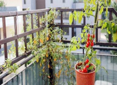 زراعة الخضراوات في المنزل وأساسيات زراعة البلكونة