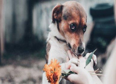 تعليم الأطفال الرفق بالحيوان ورعاية الحيوانات