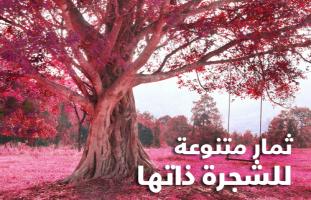 ثمار متنوعة للشجرة ذاتها