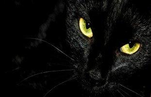 ما تفسير رؤية قطة سوداء تريد افتراسي في منامي