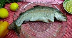 تجهيز السمكة الحرة